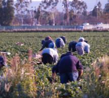 Εξαλείφουν τους αγρότες