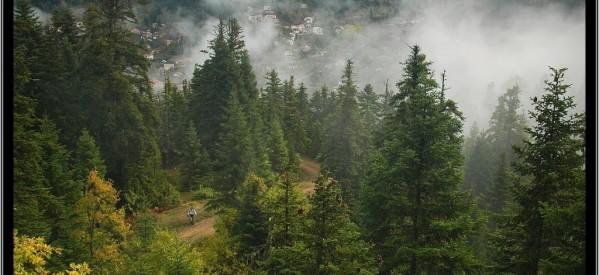 Κραυγές αγωνίας για τα δάση μας