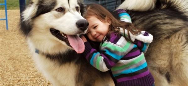 Σκύλος δάγκωσε ανήλικο στη Λάρισα