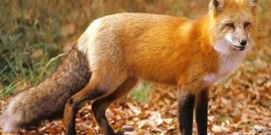 Εμβολιασμός από αερός κατά της λύσσας