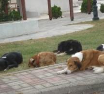 Λάρισα: 270.000 ευρώ πρόστιμο για θανάτωση και κακοποίηση σκύλων