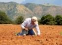 Σε εξέλιξη η Απογραφή Γεωργίας – Κτηνοτροφίας 2021