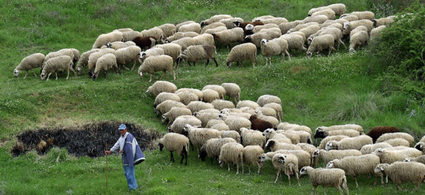 Ελληνες απασχολούσαν παράνομα αλλοδαπούς σε κτηνοτροφικές μονάδες