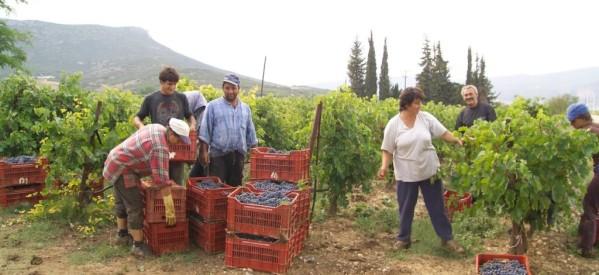 ΚΚΕ: Ο αγώνας της αγροτιάς αφορά και τη διατροφή μας