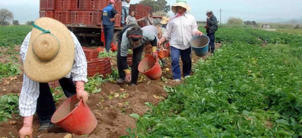 Χαρακόπουλος σε Βλαχογιάννη: Υπάρχουν επιλογές για καταβολή εισφοράς αγροτών