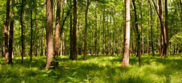 Το ΚΚΕ για την παγκόσμια ημέρα δασών