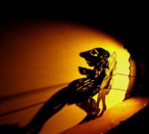 Παραστάσεις Καραγκιόζη απο το Δημοτικό Θέατρο Σκιών