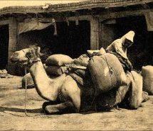 Την καμήλα δεν θα τη φορτώνανε αν δεν γονάτιζε