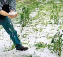Τεράστιες ζημιές σε αμπέλια στη Λυγαριά Τυρνάβου