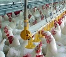 «Καμπάνες» από την Επιτροπή Ανταγωνισμού σε 13 πτηνοτροφικές επιχειρήσεις για καρτέλ