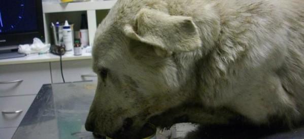 Βασάνισε σκύλα στο Μεγαλοχώρι Τρικάλων: την έσερνε στην άσφαλτο ετοιμόγεννη (πολύ σκληρές εικόνες)