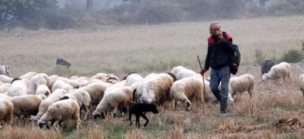 ΣΥΡΙΖΑ: Ανάγκη λήψης άμεσων μέτρων για την στήριξη της τρικαλινής κτηνοτροφίας