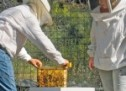 Η Π.Ε. Τρικάλων για τις αναλύσεις μελιού που διατίθενται στην αγορά
