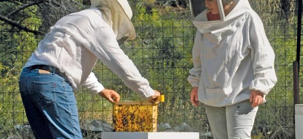 Μέλι από τον Όλυμπο