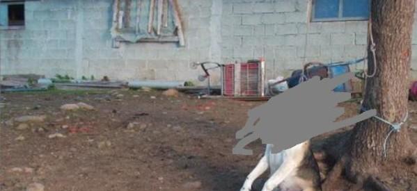 Βλαχάβα Καλαμπάκας: Την Τρίτη η δίκη του άνδρα που απαγχόνισε τον σκύλο του