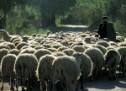 Tύρναβος: Συστήνουν Ομάδα Παραγωγών και αξιοποιούν το γάλα οι κτηνοτρόφοι