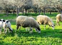 Για την Βιολογική Κτηνοτροφία