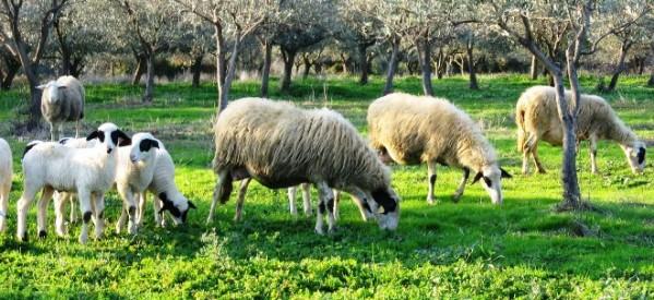 Συνδρομή της Περιφέρειας σε κτηνοτρόφους για νεκρά ζώα