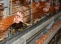 Πρόβλεψη περιφερειάρχη: «Το χειμώνα πιθανόν να πεινάσουμε -Βάλτε κήπο & κότες»
