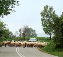 O πρώην βουλευτής της ΝΔ που έγινε βοσκός με 1.000 πρόβατα