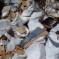 """""""Oνειδος και Ντροπή  , η  Τρικαλινή ιστορία στα σκουπίδια – Γιατί κ. Δήμαρχε ;"""