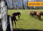 Φάκελλος «Ιπποτούρ» – Αλογα Μανιτάρια , ενεργειακές επενδύσεις NRG η άνοδος και η πτώση