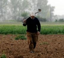 Γιατί δουλεύουν άγρια τους αγρότες; – Συνεχίζουν να τάζουν «παπάδες»  στην αγροτιά