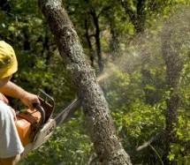 Αναστάτωση στο Ματονέρι για την υλοτομία του «Διακατεχόμενου Δάσους»
