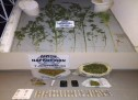 Καλαμπάκα – Συλλήψεις για καλλιέργεια δενδρυλλίων κάνναβης και κατοχή ναρκωτικών