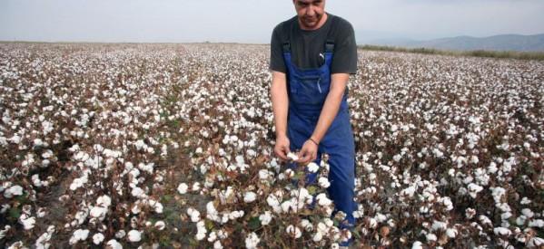Στο έλεος των καιρικών φαινομένων οι κόποι μιας ολόκληρης χρονιάς για τους αγρότες
