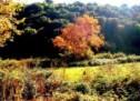 Να προστατευθούν τα άγρια αρωματικά φυτά του νομού Τρικάλων