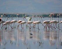 Το έργο της Λίμνης Κάρλα υποψήφιο για το βραβείο του Συμβουλίου της Ευρώπης