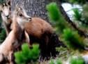 Τρίκαλα: Ενα ταξίδι στους μοναδικούς βιοτόπους Natura 2000 – Σπάνια χλωρίδα και πανίδα – ΑΣΠΡΟΠΟΤΑΜΟΣ, ΚΟΖΑΚΑΣ, ΜΕΤΕΩΡΑ, ΑΝΤΙΧΑΣΙΑ