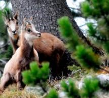 Ενα ταξίδι στους μοναδικούς βιοτόπους Natura 2000 – Σπάνια χλωρίδα και πανίδα – ΑΣΠΡΟΠΟΤΑΜΟΣ, ΚΟΖΑΚΑΣ, ΜΕΤΕΩΡΑ, ΑΝΤΙΧΑΣΙΑ