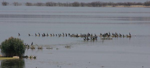 Η «Οικολογική Θεσσαλία» για τα νεκρά πτηνά της Κάρλας