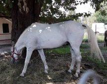Μεγάλη κομπίνα με άλογα στη Λάρισα: Έπαιρναν επιδοτήσεις για ζώα που δεν είχαν