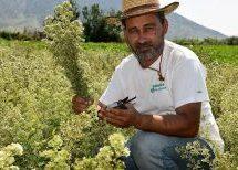 Aγρότης στο Ζάρκο δείχνει το δρόμο στους συναδέλφους του για την καλλιέργεια αρωματικών φυτών