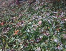 Σφοδρή χαλαζόπτωση σε χωριά  των Τρικάλων