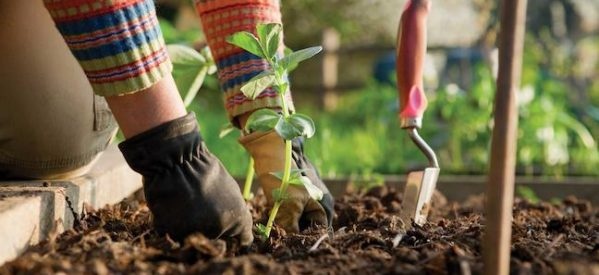 Δημήτρης Κουρέτας «Οι προτεραιότητές μου για τη γεωργία»