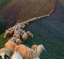 Μετανάστες βοσκοί «σώζουν» την κτηνοτροφία