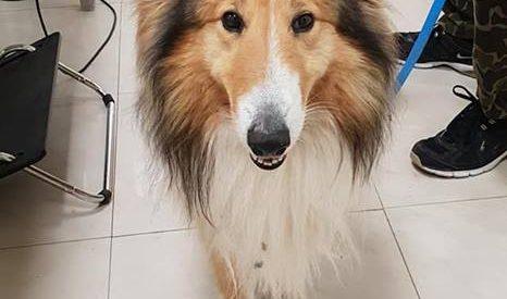 Βρέθηκε ο σκυλάκος της φωτογραφίας