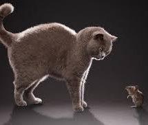 Τον γάτο κι αν αλευρωθεί, ο ποντικός τον ξέρει….