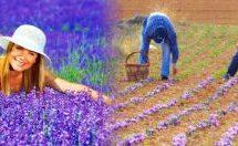 """Ξεκινούν οι εργασίες για την δημιουργία του """"Βοτανικού Κήπου"""" στην Πιαλεία! – Τι προβλέπεται, τα πολλαπλά οφέλη Αρωματικών και Φαρμακευτικών φυτών"""