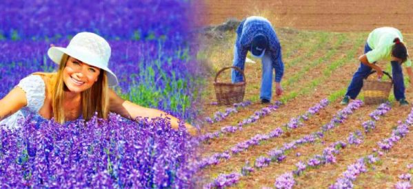Κώστας Μαράβας : Κατασκευή Βοτανικού Πάρκου Αρωματικών και Φαρμακευτικών φυτών . Τι προβλέπεται, τα πολλαπλά οφέλη…