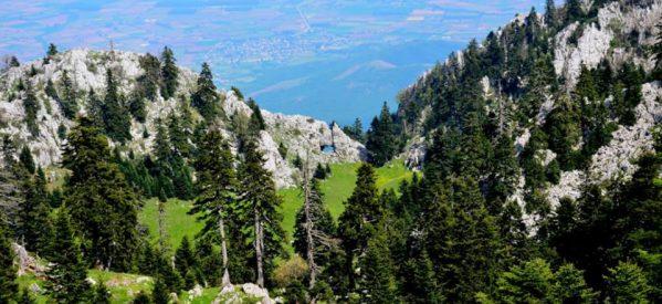 Aρκουδάκι κάνει βόλτες στο Περτούλι και κλέβει καρδιές