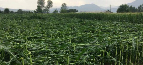 Ισχυροί άνεμοι και χαλάζι σάρωσαν  καλλιέργειες στα Τρίκαλα