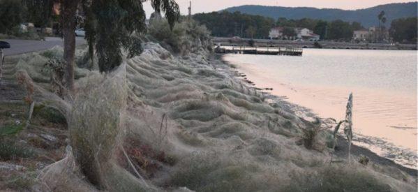 Απίστευτες φωτογραφίες: Τεράστιο «πέπλο» από ιστούς αράχνης «κατάπιε» 300 μέτρα βλάστησης στο Αιτωλικό