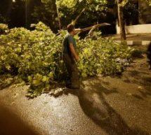 Μεγάλες ζημιές από χαλαζόπτωση στην περιοχή Πηνειάδας