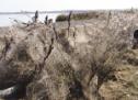 Απίστευτες φωτογραφίες: Τεράστιο «πέπλο» από ιστούς αράχνης «κατάπιε» 1000 μέτρα βλάστησης στη Βιστωνίδα