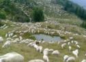 Σε «νευρική κρίση» η Τρικαλινή κτηνοτροφία – Αν δεν ληφθούν μέτρα άμεσα, θα οδηγηθεί σε πλήρη κατάρρευση